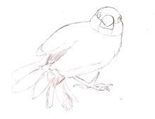 ようこそ!とりみカフェ!!~鳥カフェでの出来事や鳥写真~-鳥塗り絵ー文鳥