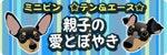 $ミニピン☆テン&エース☆親子の愛とぼやき-TEN&ACE