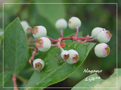 Nagano Life**