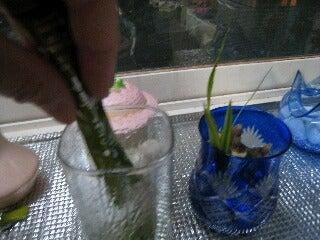 ふるさと青汁