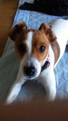 犬と怪獣のMIX・スイープのつぶやき-201106241434000.jpg