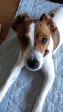 犬と怪獣のMIX・スイープのつぶやき-201106241435000.jpg