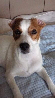 犬と怪獣のMIX・スイープのつぶやき-201106241434001.jpg