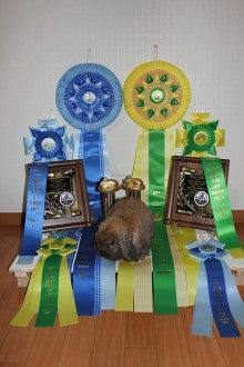 $お城の姫うさぎのブログ-副賞のリボン等
