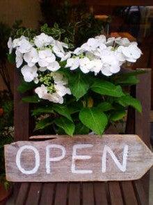 コミュニティ・ベーカリー                          風のすみかな日々-紫陽花