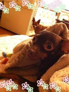 $ちびひめのブログ-犬