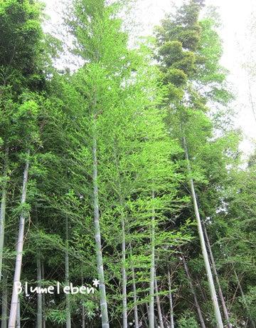 動画で見る!3分フラワーアレンジ-夏の竹林