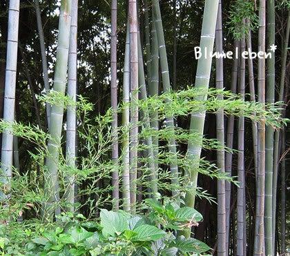動画で見る!3分フラワーアレンジ-若竹