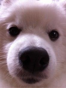 $『クヌート犬みらい&ポメラニアンLea の わんわんBLOG + α』-未設定