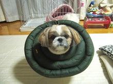 $モコたん日記パート3!!