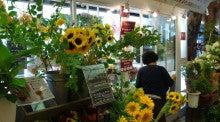 お花屋さんの花かたらい ファレット川西店-himawari