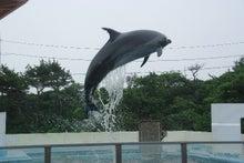毎日はっぴぃ気分☆-イルカのジャンプ