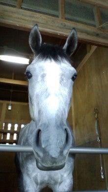 藤岡佑介 オフィシャルブログ 「馬に願いを」 Powered by Ameba-110630_071703.jpg
