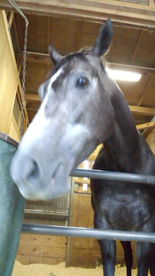 藤岡佑介 オフィシャルブログ 「馬に願いを」 Powered by Ameba-110630_070902.jpg