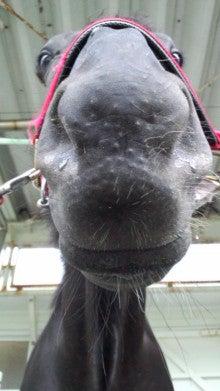 藤岡佑介 オフィシャルブログ 「馬に願いを」 Powered by Ameba-110630_065051.jpg