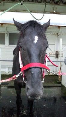 藤岡佑介 オフィシャルブログ 「馬に願いを」 Powered by Ameba-110630_065036.jpg