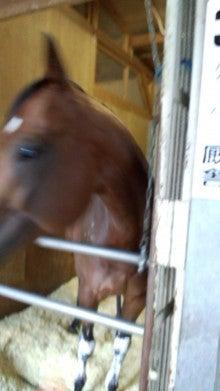 藤岡佑介 オフィシャルブログ 「馬に願いを」 Powered by Ameba-110630_065554.jpg