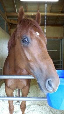 藤岡佑介 オフィシャルブログ 「馬に願いを」 Powered by Ameba-110628_084153.jpg