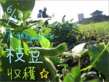 $greenbirdくまもと農園-枝豆1