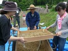 かもの子農園でボランティアしよう♪-小麦ふるい