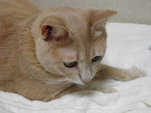 OXIO-CRAFT(オキクラ)の「革雑貨」製作日記-猫さん
