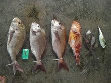 ぶ~ちゃんの釣り日記☆たま~にイカコ☆