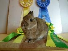 Lapin House ~American Rabbit Shop~ のブログ
