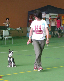 「トコトコ歩く犬」 part2       http://hocci-pal.jp-eddie