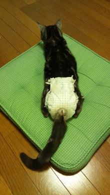 やっぱり猫に鰹節-DSC_0106.JPG