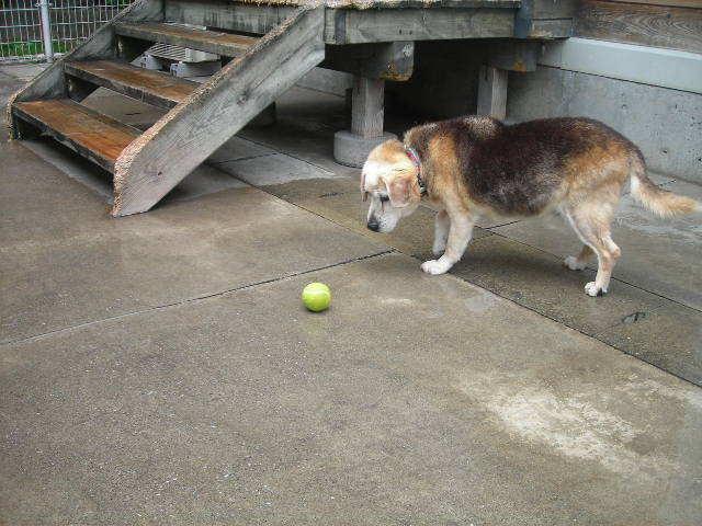 東北動物レスキュー 長崎の保健所の命を救う会の代表のブログ-マリ
