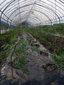 仙台de脱サラアラサー「農業はじめます!」農家研修1年目編