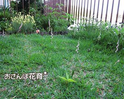 動画で見る!3分フラワーアレンジ-芝生からネジバナ