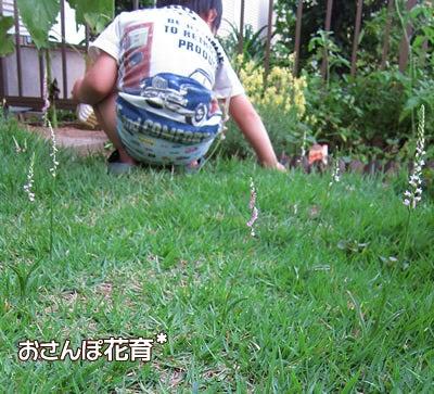 動画で見る!3分フラワーアレンジ-ネジバナ咲きました