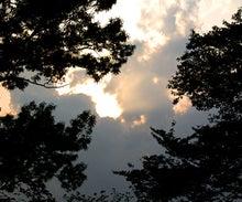 ウェブディレクターのブログ-空樹