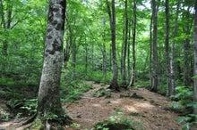 白神山地ツアーで能代山本地区の活性化すっぺ-2011年7月の白神山地・岳岱最新情報3