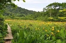 白神山地ツアーで能代山本地区の活性化すっぺ-7月の白神山地・田苗代湿原最新情報1