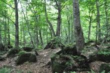 白神山地ツアーで能代山本地区の活性化すっぺ-2011年7月の白神山地・岳岱最新情報1