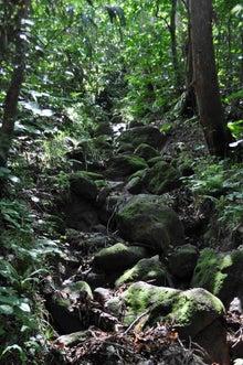 白神山地ツアーで能代山本地区の活性化すっぺ-2011年7月の白神山地・藤里駒ケ岳1
