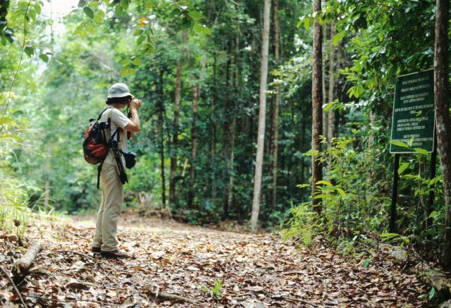 熱帯雨林を歩く
