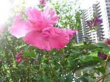 イクメンファミリーのココロを元気にする☆コトバの貯金箱-朝の花