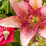 「花の力 for J…