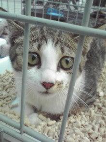 笑いと癒しの花ねこ日記 猫がいる整体院-110709_1636~02.jpg