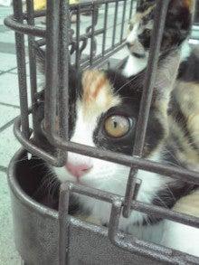 笑いと癒しの花ねこ日記 猫がいる整体院-110709_1639~02.jpg