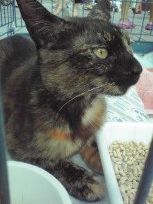笑いと癒しの花ねこ日記 猫がいる整体院-110709_1655~01.jpg