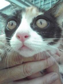 笑いと癒しの花ねこ日記 猫がいる整体院-110709_1640~02.jpg