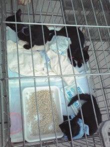 笑いと癒しの花ねこ日記 猫がいる整体院-110709_1656~01.jpg