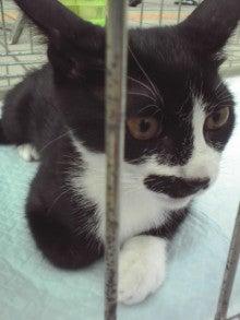 笑いと癒しの花ねこ日記 猫がいる整体院-110709_1654~01.jpg