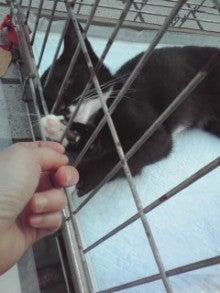 笑いと癒しの花ねこ日記 猫がいる整体院-110709_1659~01.jpg