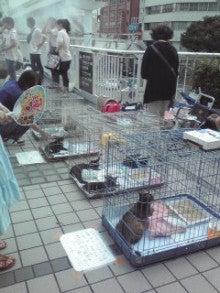 笑いと癒しの花ねこ日記 猫がいる整体院-110709_1636~01.jpg