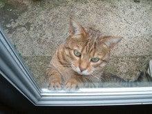 $さすらい通信ロンドン特派員nekobabaaのQueen's English猫ブログ